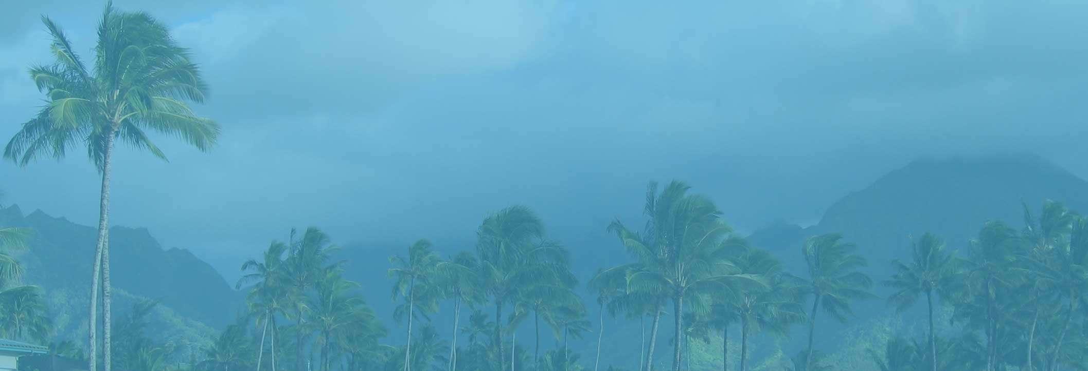 palms-bg-w-overlay-a